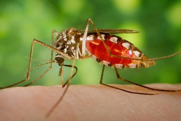تا سال 2020 مالاریا در ایران حذف میشود