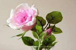 آموزش پرورش گل رز درگلدان
