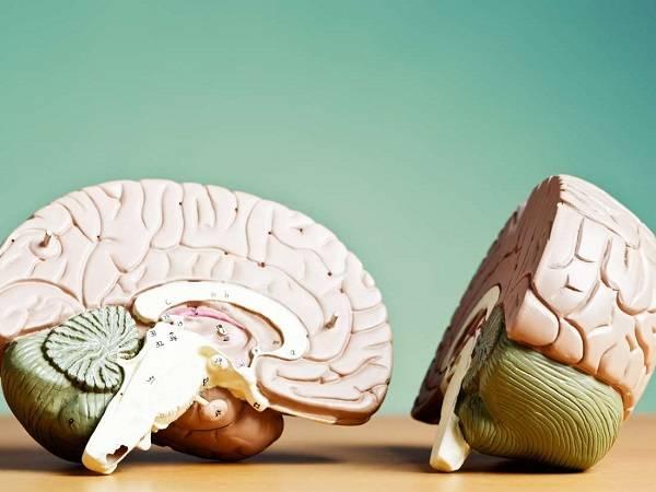 تفاوت نیمکره چپ و راست مغز انسان - انشا در مورد مغز
