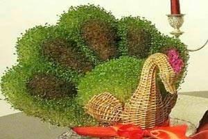 آموزش کاشت سبزه به شکل طاووس ویژه نوروز 96