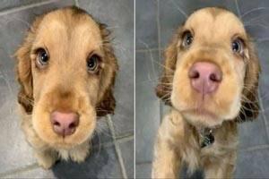 چشمان فوق العاده زیبا و خیره کننده این سگ جهانی شد+ عکس